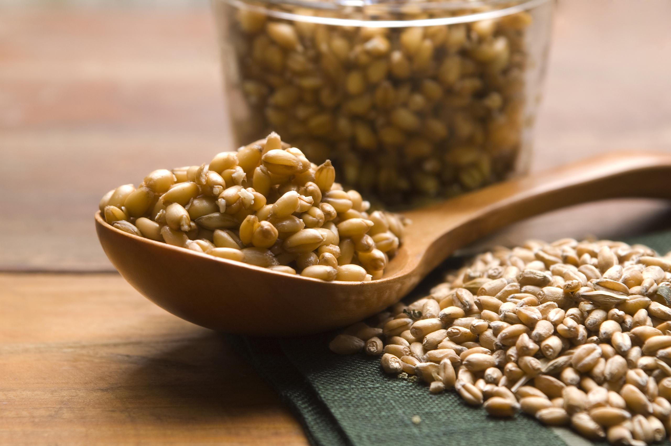 Germe di grano o frumento 1
