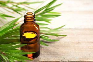 Articolo Melaleuca Tea Tree Oil Pauline srl paulinesrl biocosmesi Bio image 1